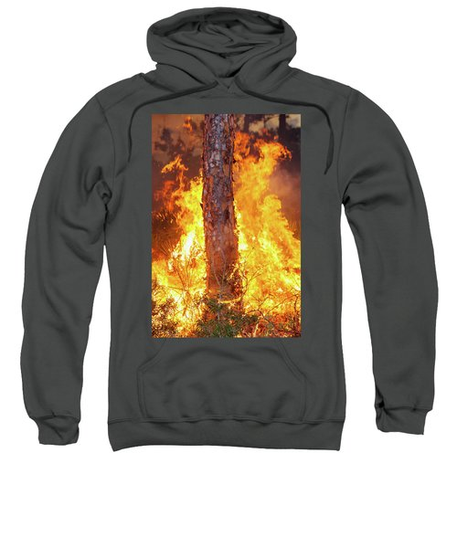 Blazing Pine Sweatshirt