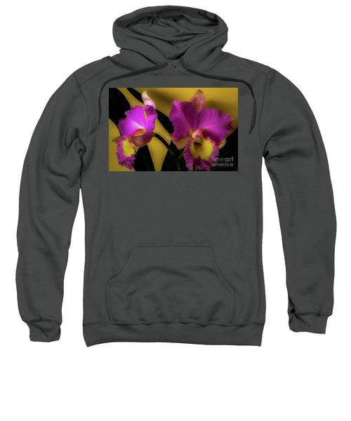 Blooming Cattleya Orchids Sweatshirt
