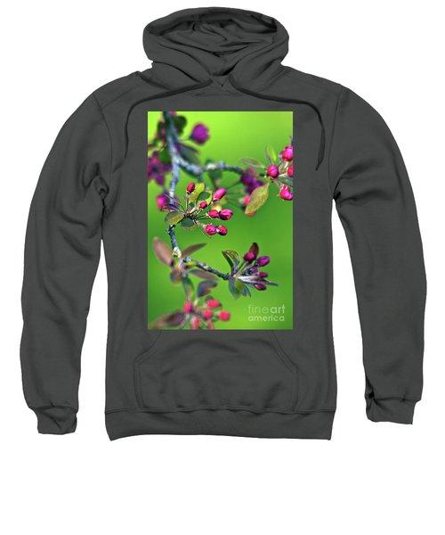 Blooming Spring Poetry Sweatshirt