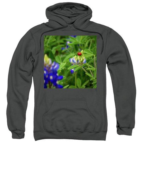 Texas Blue Bonnet And Ladybug Sweatshirt