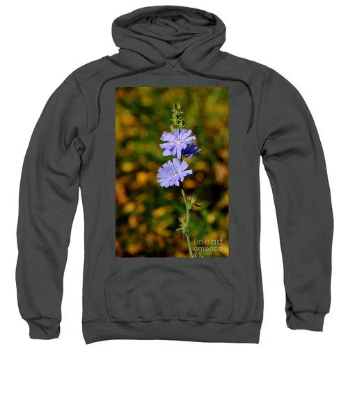 Blue Chicory 2 Sweatshirt