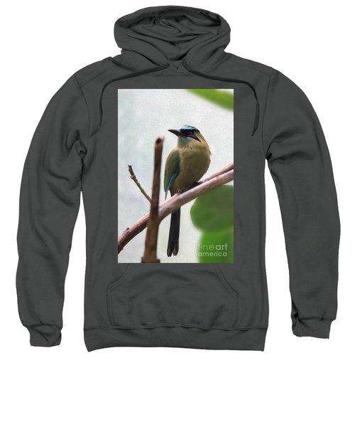 Blue-crowned Motmot Oil Sweatshirt