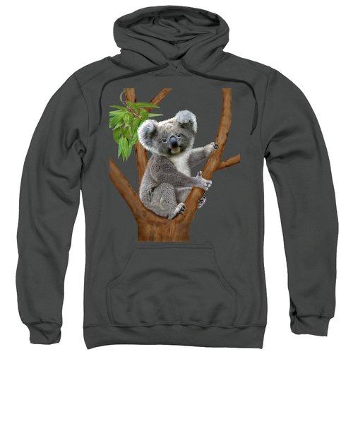 Blue-eyed Baby Koala Sweatshirt by Glenn Holbrook