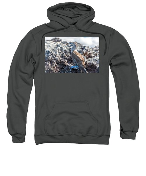 Blue Footed Booby Sweatshirt by Jess Kraft