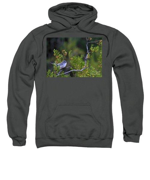 Blue-gray Gnatcatcher  Sweatshirt