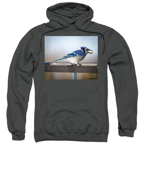 Blue Jay With A Mouth Full Sweatshirt