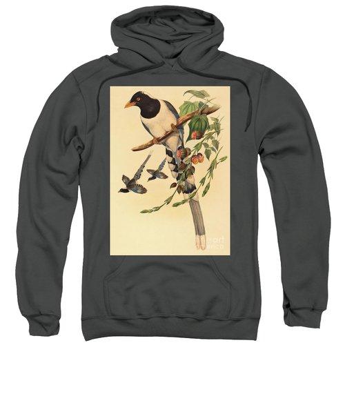 Blue Magpie, Urocissa Magnirostris Sweatshirt