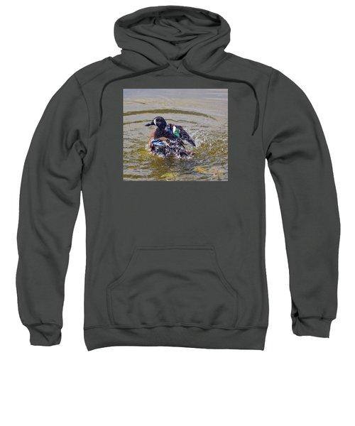 Blue Winged Teal 5 Sweatshirt