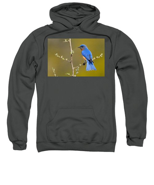 Bluebird Bliss Sweatshirt