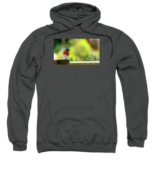 Bluebird Sweatshirt