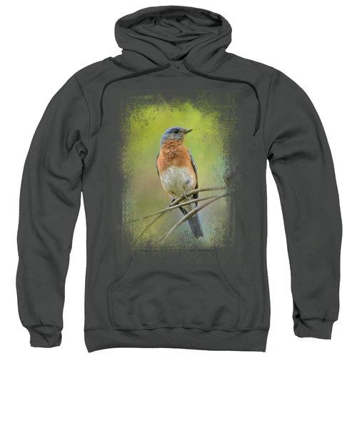 Bluebird On A Spring Day Sweatshirt by Jai Johnson