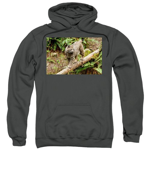 Bobcat In Forest Sweatshirt