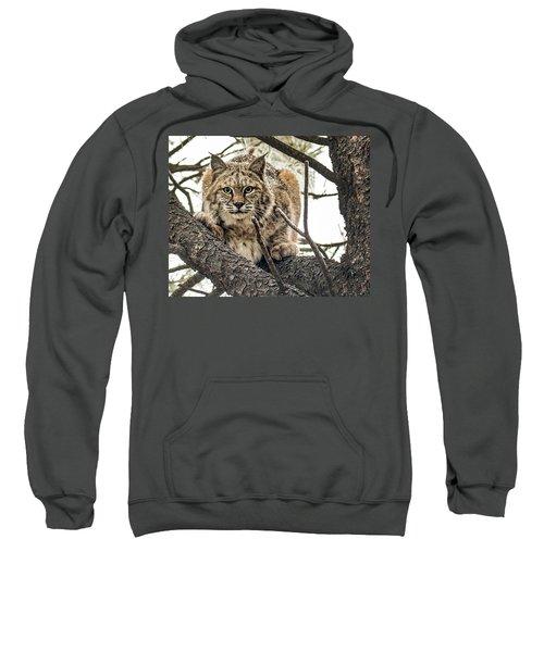 Bobcat In Winter Sweatshirt