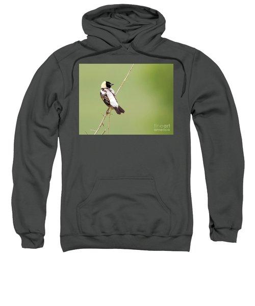 Bobolink Looking At You Sweatshirt