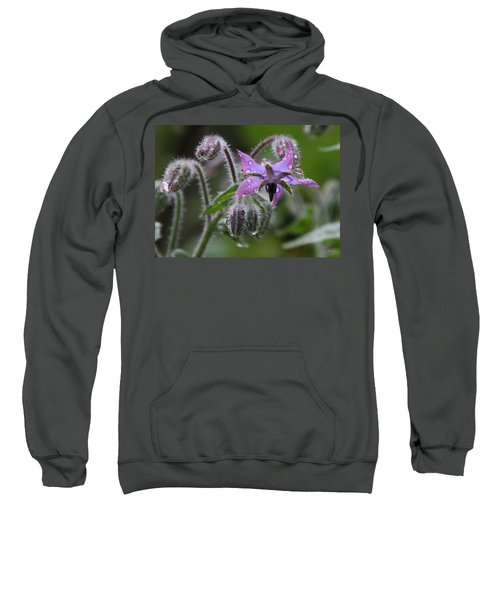 Borage Umbrella Sweatshirt