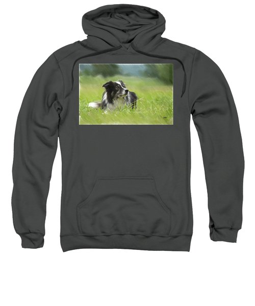 Border Collie - Dwp2189332 Sweatshirt