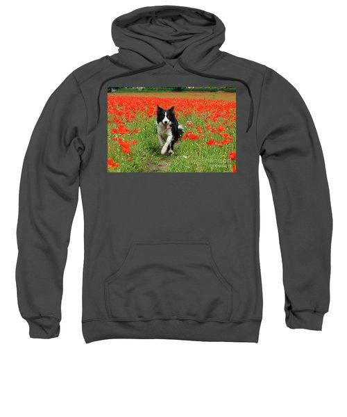 Border Collie In Poppy Field Sweatshirt