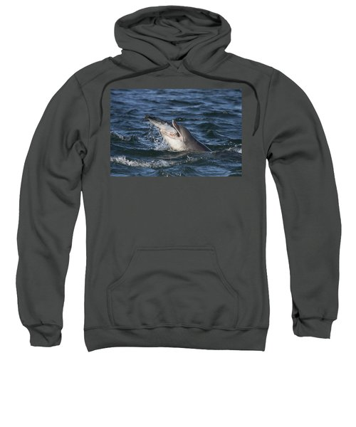 Bottlenose Dolphin Eating A Salmon - Scotland #5 Sweatshirt