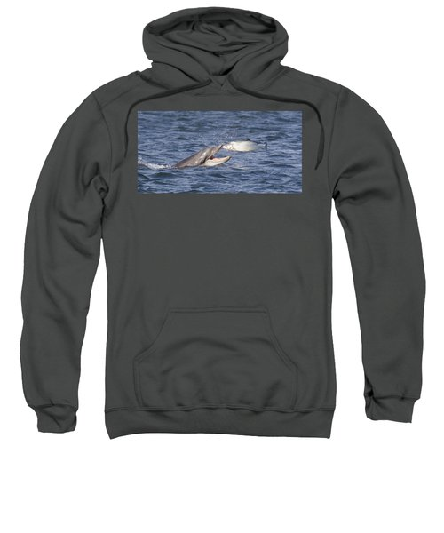 Bottlenose Dolphin Eating Salmon - Scotland  #36 Sweatshirt