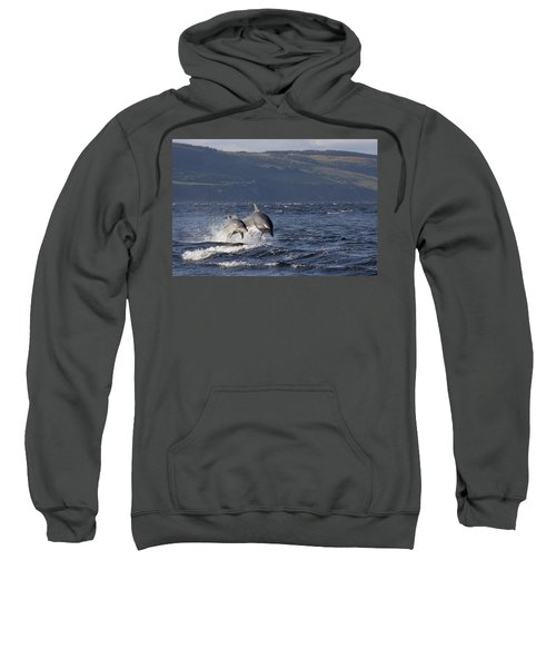 Bottlenose Dolphins Leaping - Scotland  #37 Sweatshirt