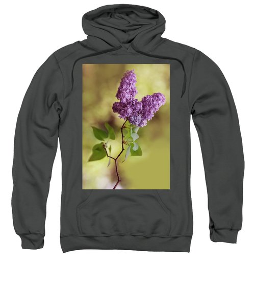 Branch Of Fresh Violet Lilac Sweatshirt