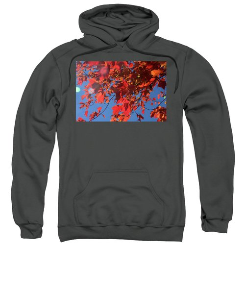 Branches Of Red Maple Leaves On Clear Sky Background Sweatshirt