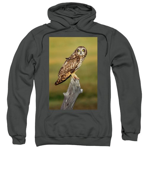 Bright-eyed Owl Sweatshirt