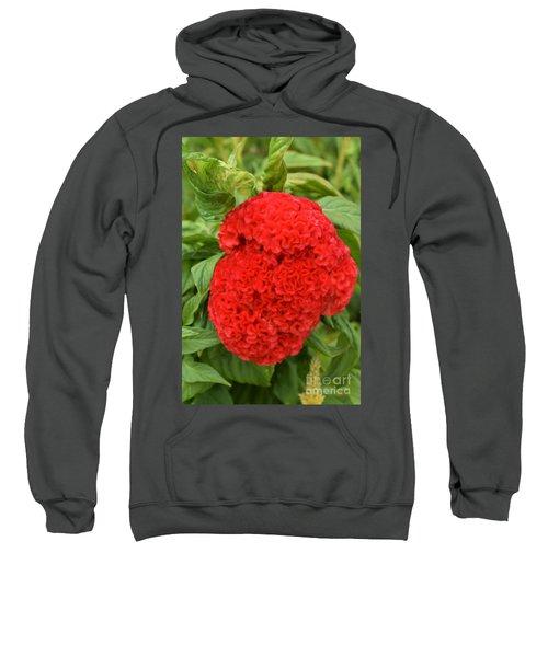 Bright Red Cockscomb Sweatshirt