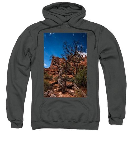 Bristlecone On Park Avenue Sweatshirt