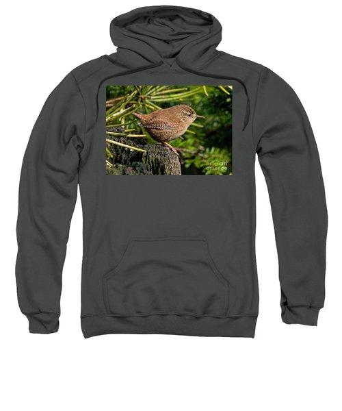 British Wren Sweatshirt