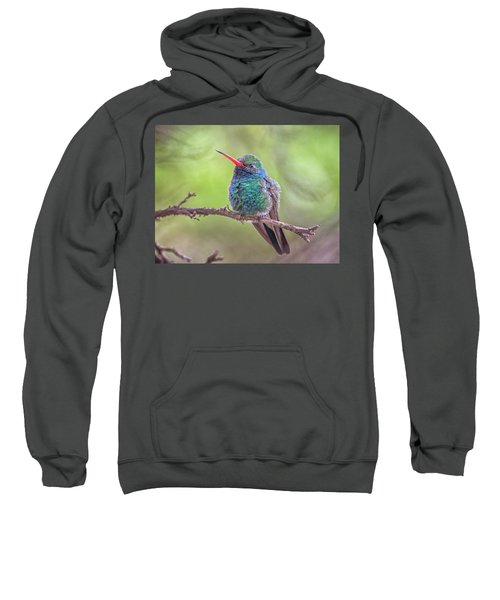 Broad-billed Hummingbird 3652 Sweatshirt