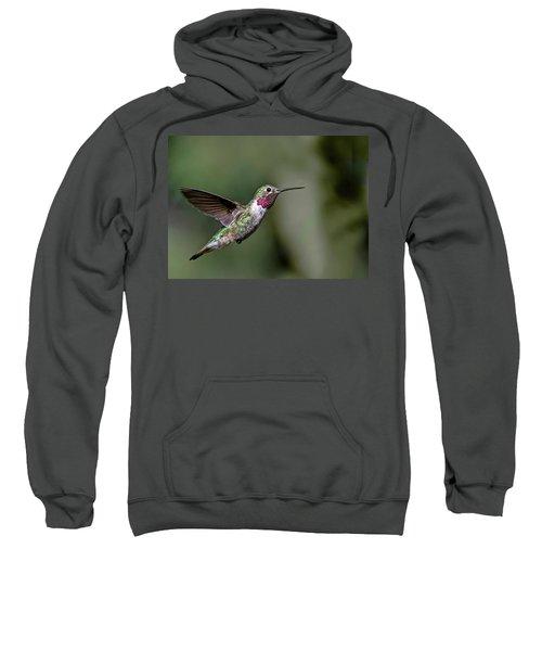 Broad-tailed Hummingbird Male Sweatshirt