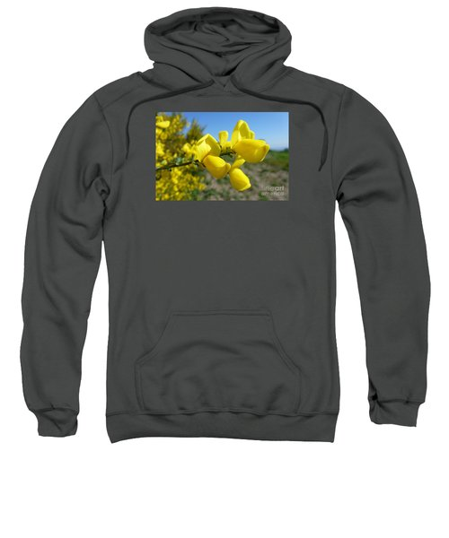 Broom In Bloom 4 Sweatshirt