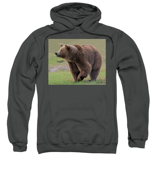 Brown Bear 14.5 Sweatshirt