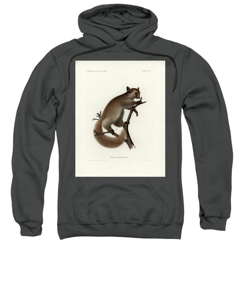 Sweatshirt featuring the drawing Brown Greater Galago Or Thick-tailed Bushbaby by Hugo Troschel and J D L Franz Wagner