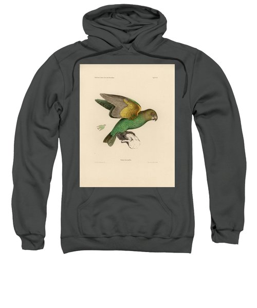 Sweatshirt featuring the drawing Brown-headed Parrot, Piocephalus Cryptoxanthus by J D L Franz Wagner
