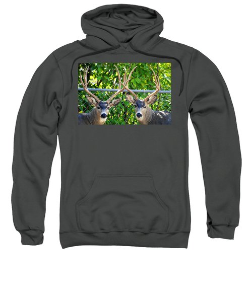 Buck Eyes Sweatshirt