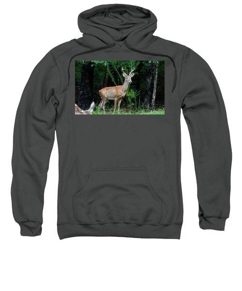 Buck Sweatshirt