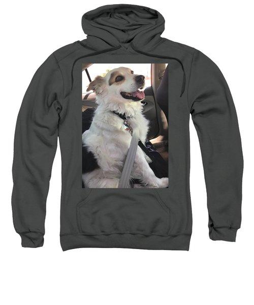 Buckle Up Sweatshirt