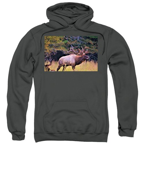 Bull Calling His Herd Sweatshirt