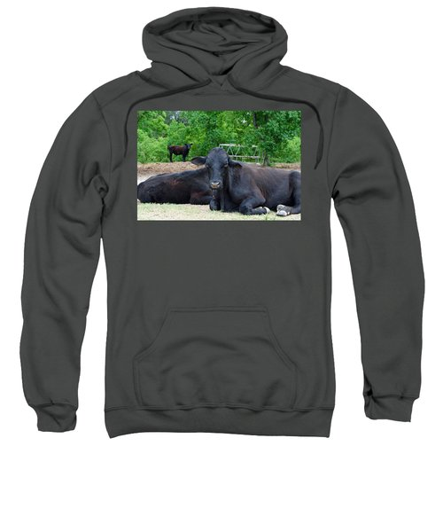 Bull Relaxing Sweatshirt