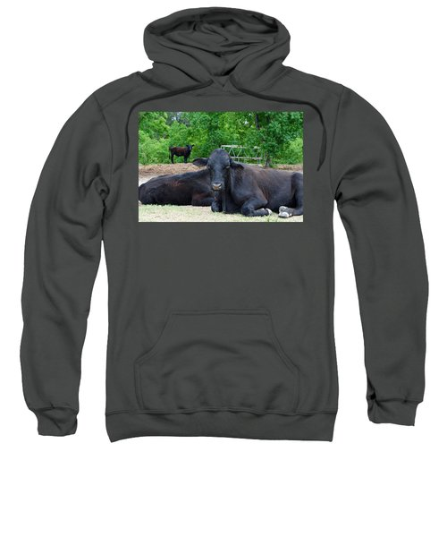 Bull Relaxing Sweatshirt