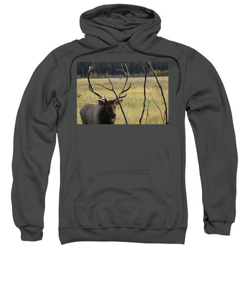 Bullelk2 Sweatshirt