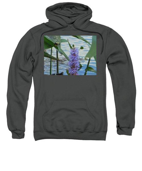 Bumblebee Pickerelweed Moth Sweatshirt