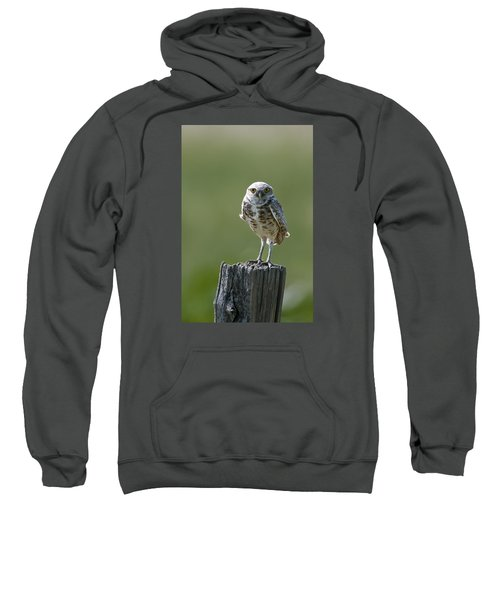 Sweatshirt featuring the photograph Burrowing Owl by Gary Lengyel