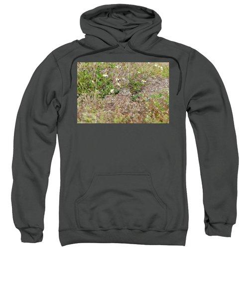 Burrowing Owl Outside His Home Sweatshirt