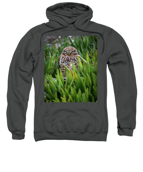 Burrowing Owl Sweatshirt