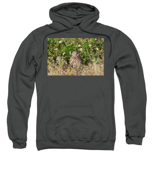 Burrowing Owls Outside Their Den Sweatshirt