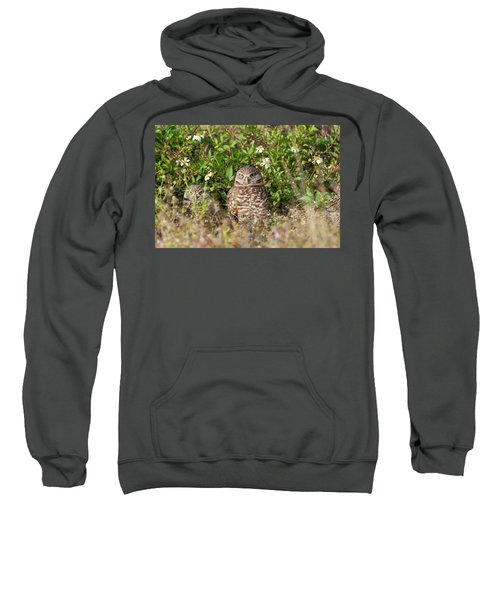 Burrowing Owls Outside Their Den Sweatshirt