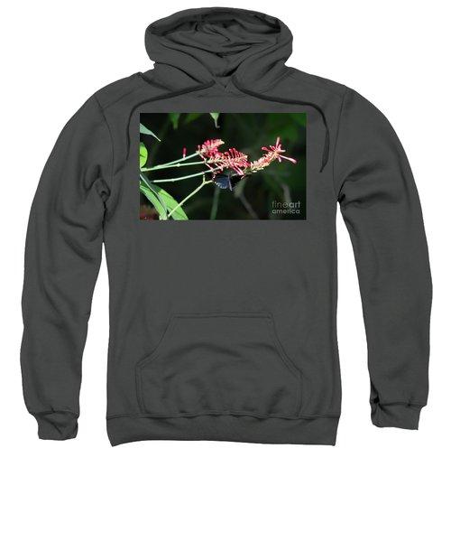Butterfly In Flight Sweatshirt